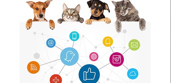 inbound marketing veterinarios
